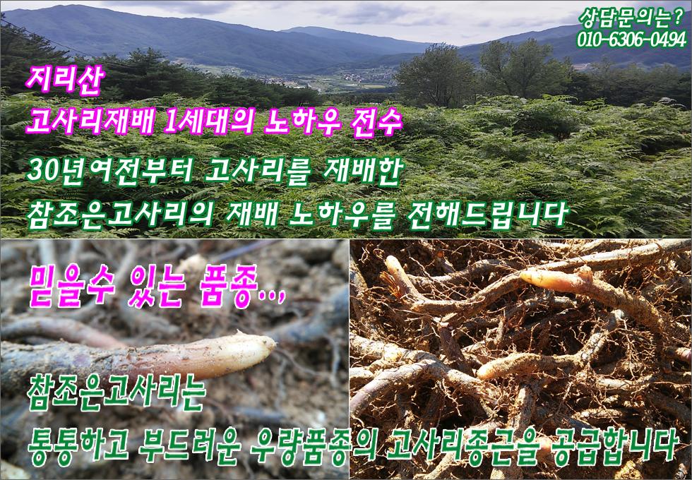메인-하단-길게-고사리-980-2b.jpg